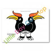 birdsoftherainforest-galleryimage-1